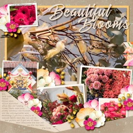 20180316-Beautiful-Blooms.jpg