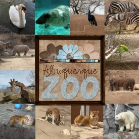 albq-zoo-2-wr.jpg
