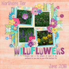 Northern_Tier_Wildflowers_2_SSD.jpg
