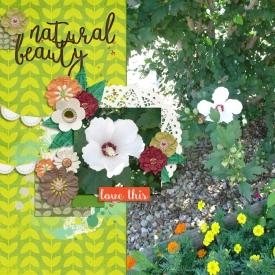 hibiscus-small.jpg