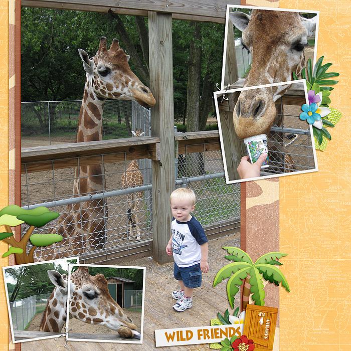 FeedingGiraffes_SSD