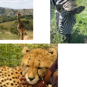africa-photo