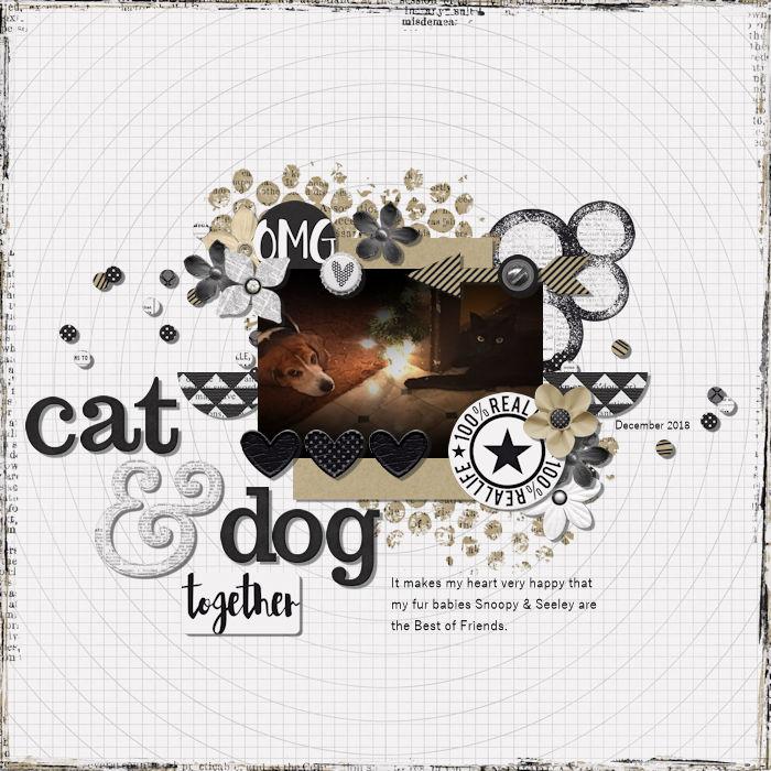 cat & dog together