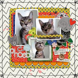 Crazy_Cat_Lady.jpg