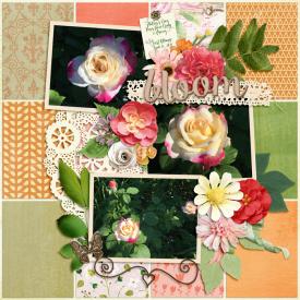 Week-1-_3-Roses_-First-Bloom-for-web.jpg
