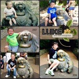 Week-38-Luke-Orangutan-700.jpg