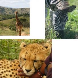 africa-photo.jpg