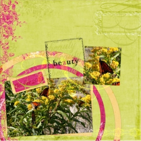 butterflies_500x500.jpg