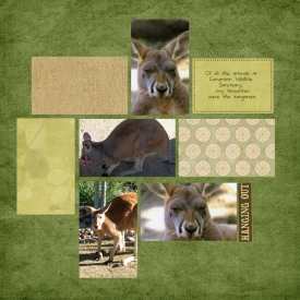 hanging-out---kangaroos-2.jpg