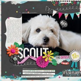 scout_web.jpg
