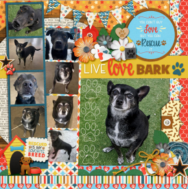 web_12-2020_Rightt-Bark_Play-cs-DIU22-megsc_petrescue.jpg