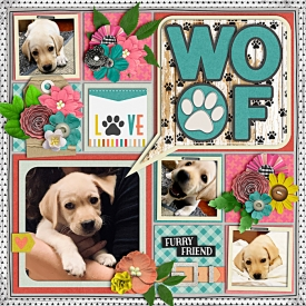 web_Puppy.jpg