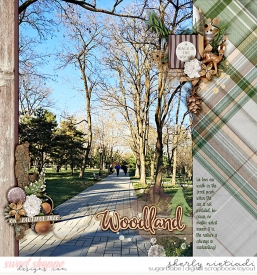 161127_lj_winterwoodland-copy.jpg