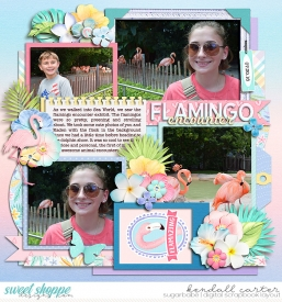 2016-07-30_Flamingos_WEB_KC.jpg