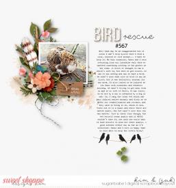 Bird-rescue_b.jpg