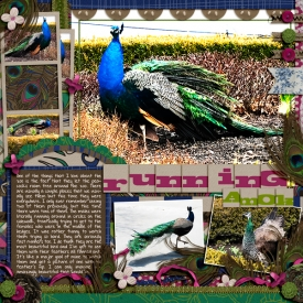 peacock600.jpg