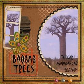 Baobab-trees.jpg