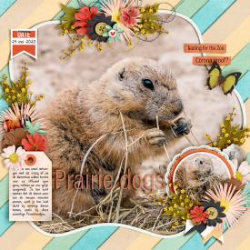 Prairie-dogs-700.jpg