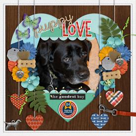puppylove-web-700.jpg