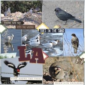16nov_birds.jpg