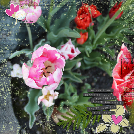 1web-Plant-Sara.jpg