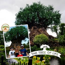 treeoflifeweb.jpg
