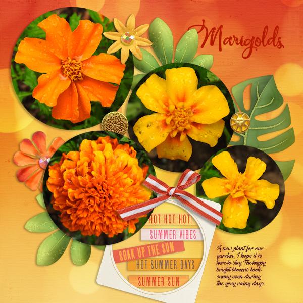 200701_marigold