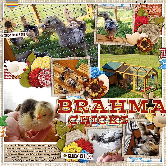 BrahmaChicks