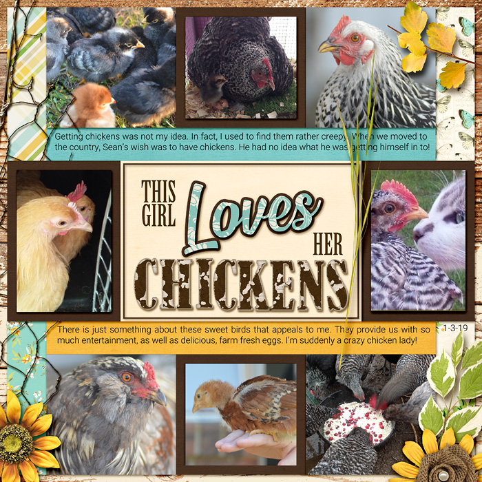 aam_2019_01_03_chickens