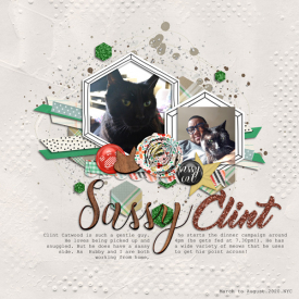 11_wildcard_Sassy-Clint.jpg