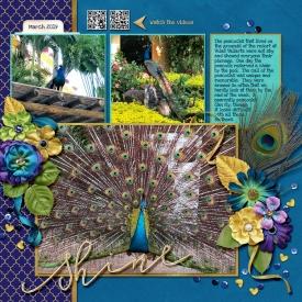 2019-Peacock-web2.jpg