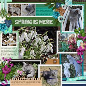 2102_feb_cat_spring.jpg