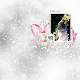 210301_true_love_cat.jpg