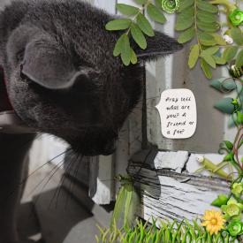211007_cat_mantis.jpg