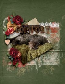 Comfort3.jpg