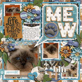 jo-layout-cat.jpg