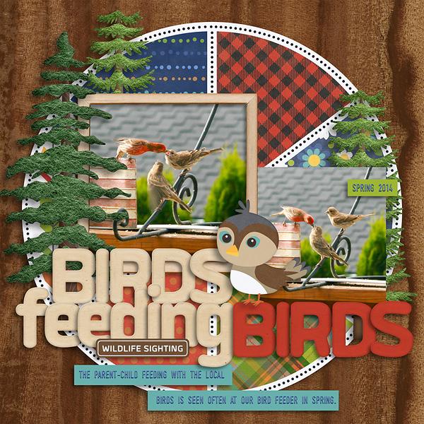 20140523-birds-feeding-birds