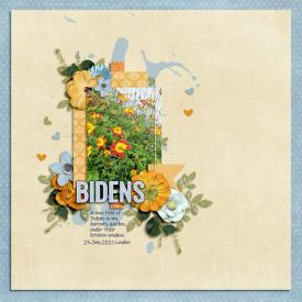 Aug29_SSD_Shadowbox_FlowerGarden-Bidens.jpg